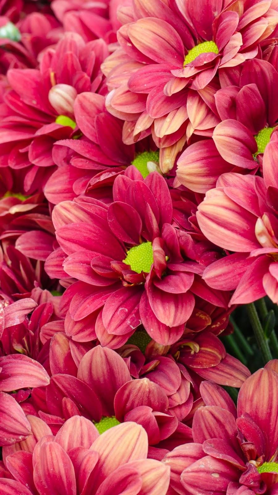 Red flowerv