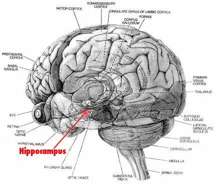 Brain    Jack    Image  Brain    Diagram