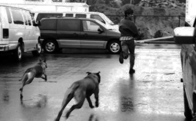 Pria ini Menjadi Muallaf Hanya Karena Dikejar Anjing. MasyaAllah