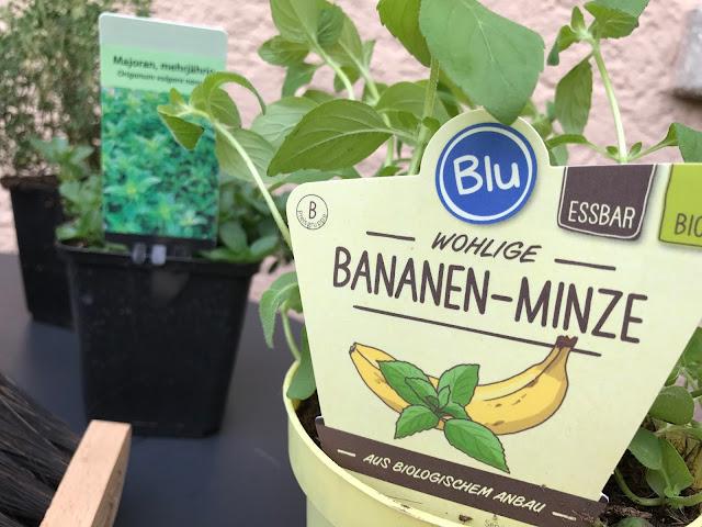Bananenminze (c) by Joachim Wenk