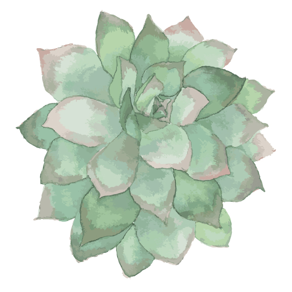 Vectorized Watercolor Succulent Painting by Thistle Thicket Studio. www.thistlethicketstudio.com