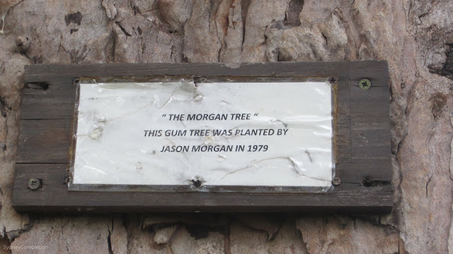 "Plaque reading ""The morgan tree"" This gum tree was planted by Jason Morgan in 1979"