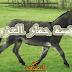 قصة حمار العزيز عليه السلام من القران والسنة
