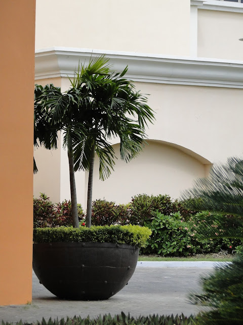 Palm trees in planters on patio in Jamaica