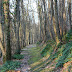 the long path to spring