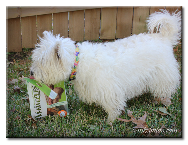 Westie licking a Whimzees' bag