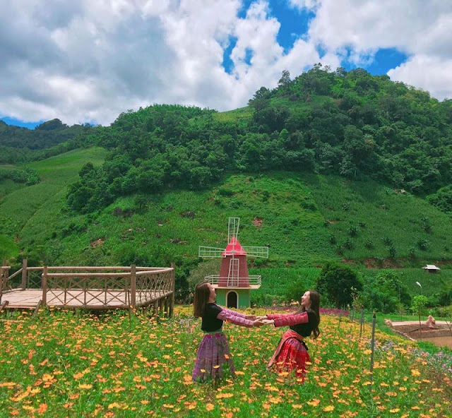 Lost In Wild Flowers On Moc Chau Plateau