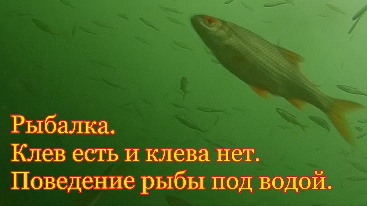 клев щуки под водой видео