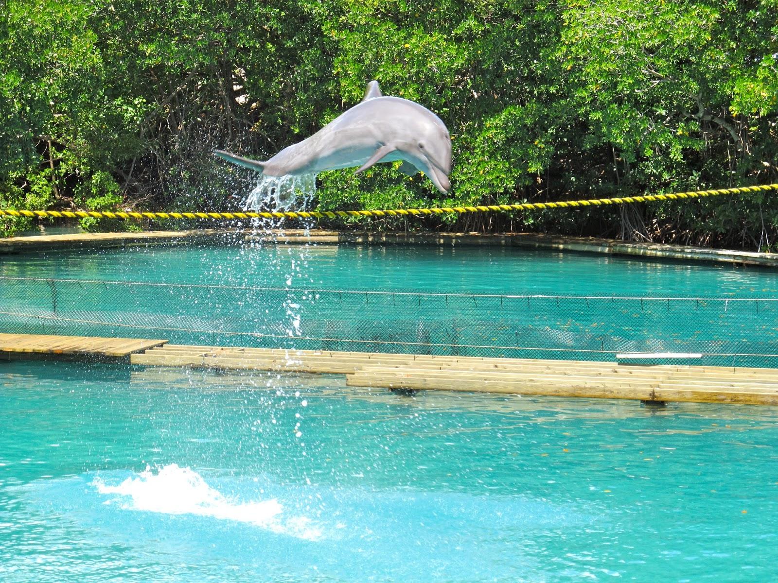 Dolphin Show at Miami Seaquarium, FL - ouroutdoortravels.blogspot.com