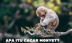 Mengenal Apa Itu Cacar Monyet (Monkeypox)
