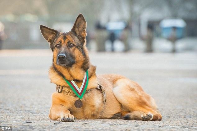 Lucca, perro condecorado con medalla militar