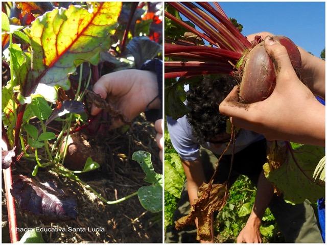 Con las manos en la tierra - Chacra Educativa Santa Lucía