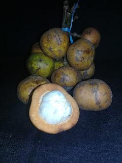 buah kapul