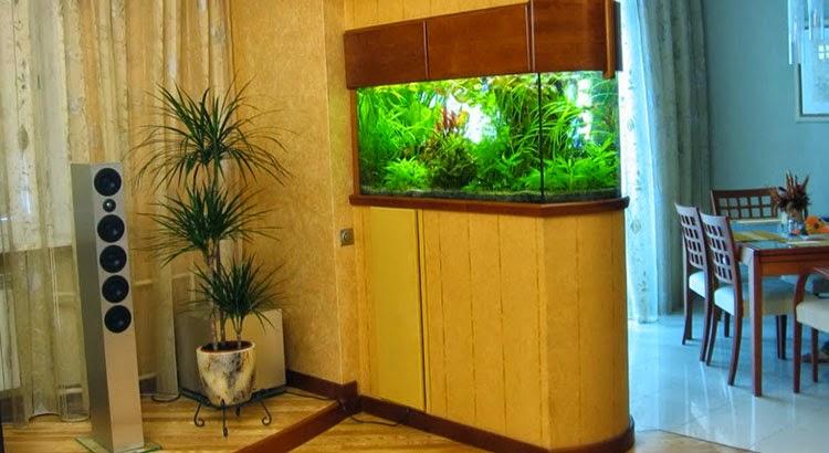 hồ cá thủy sinh trong phòng khách