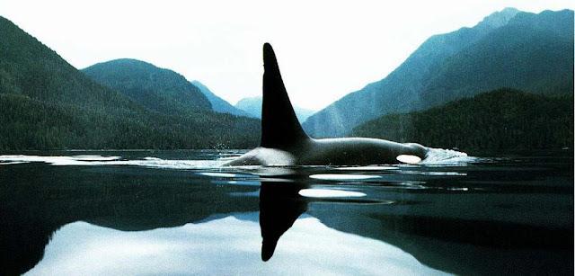 Orca y paisajes