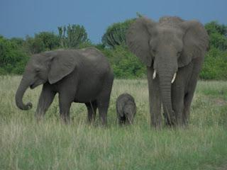 2 Days Uganda Safari Trip to Murchison Falls National Park