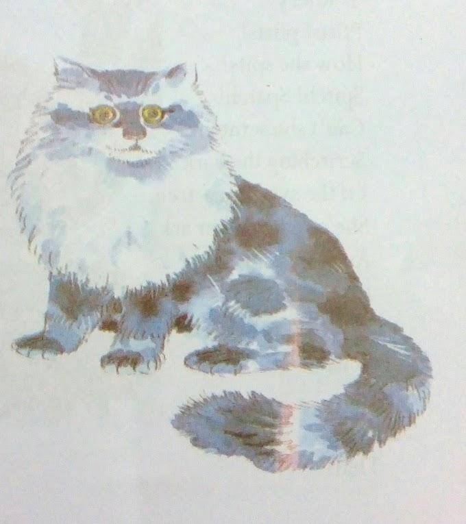 CAT | Children's Poems