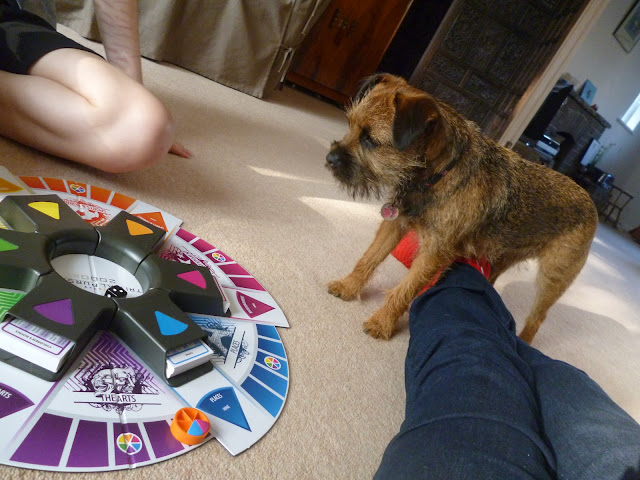 border terrier looking at trivial pursuit