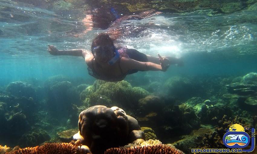 aktivitas snhorkeling dalam wisata pulau tidung