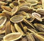 Dill Seeds meaning in English, hindi, telugu,tamil,marathi,Gujrathi,Malayalam,Kannada