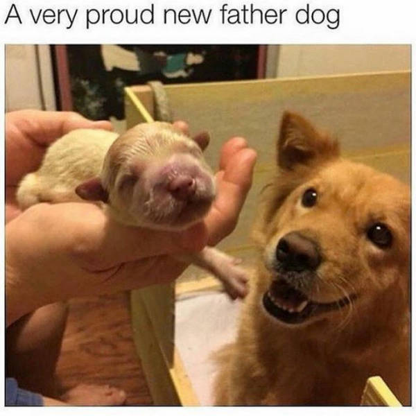 A very proud new father dog.