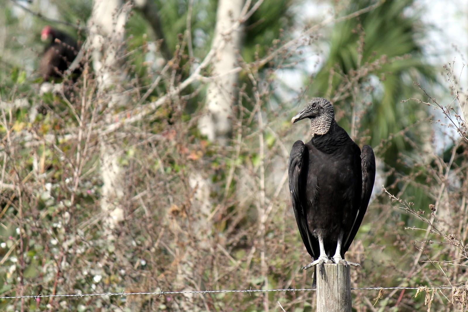 birds of prey in their natural habitat