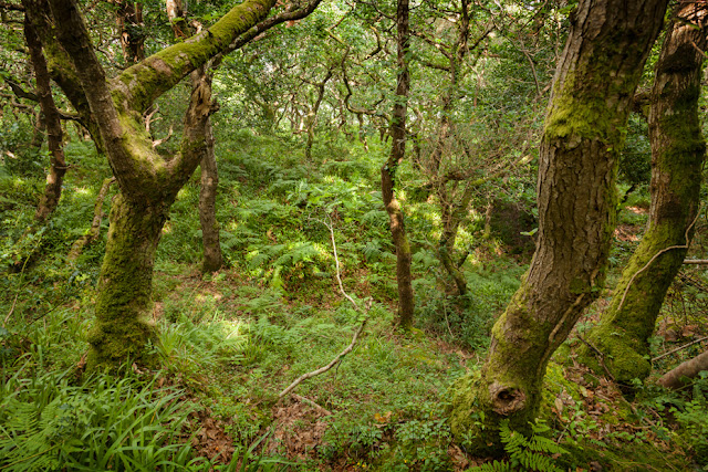Ancient Exmoor woodland at Culbone near Porlock Weir by Martyn Ferry Photography
