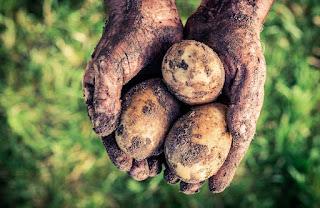 http://agriculturers.com/el-hambre-la-mayor-verguenza-del-mundo/