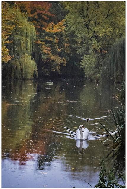 Herbst am Zeitzer Schwanenteich IV