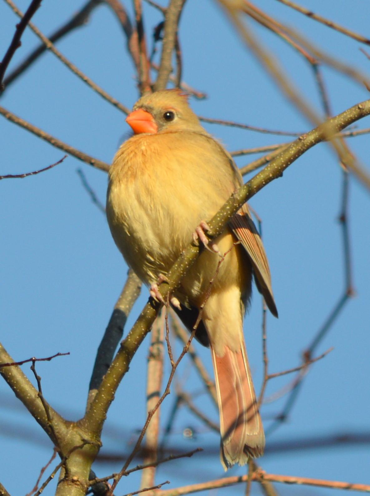 se texas birding u0026 wildlife watching kleb woods and our backyard