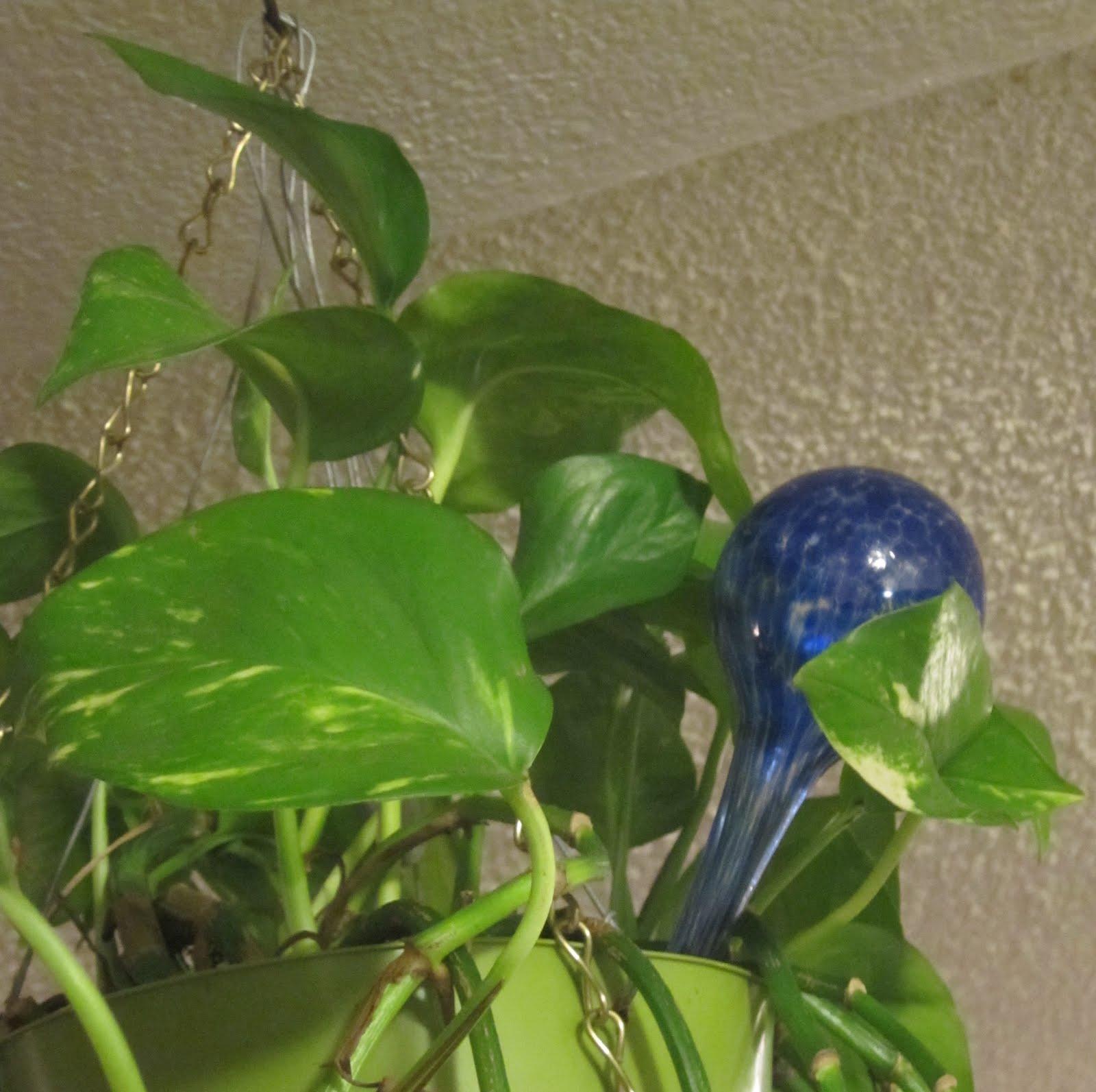 Urban Garden Deck: Aqua globes   rockin' the soil of house
