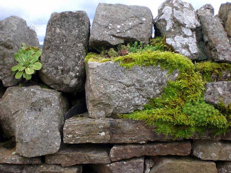 muro de piedra seca y suculentas