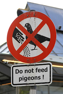 Forbidden to feed the pigeons sign.