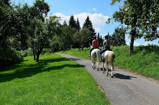 Two grey horses being ridden on a hack, walking on a road surrounded by grass fields