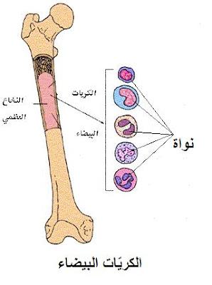 4 - بحث حول تركيبة الدم