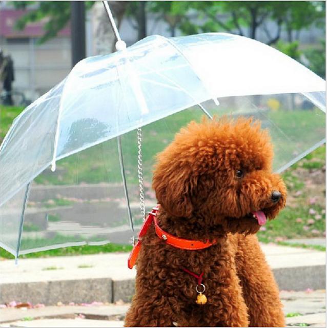 parasol ze smyczą dla psa