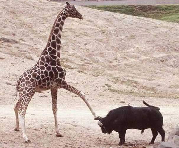 ஜSAHABATஜ: Photo Binatang Unik dan Lucu