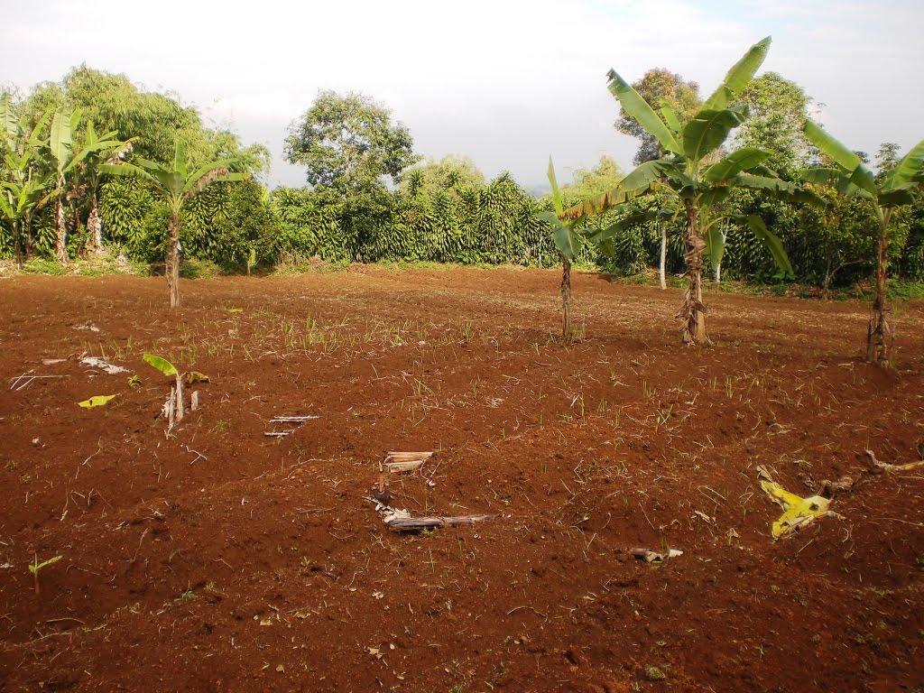 Tanah Kebun Sukabumi