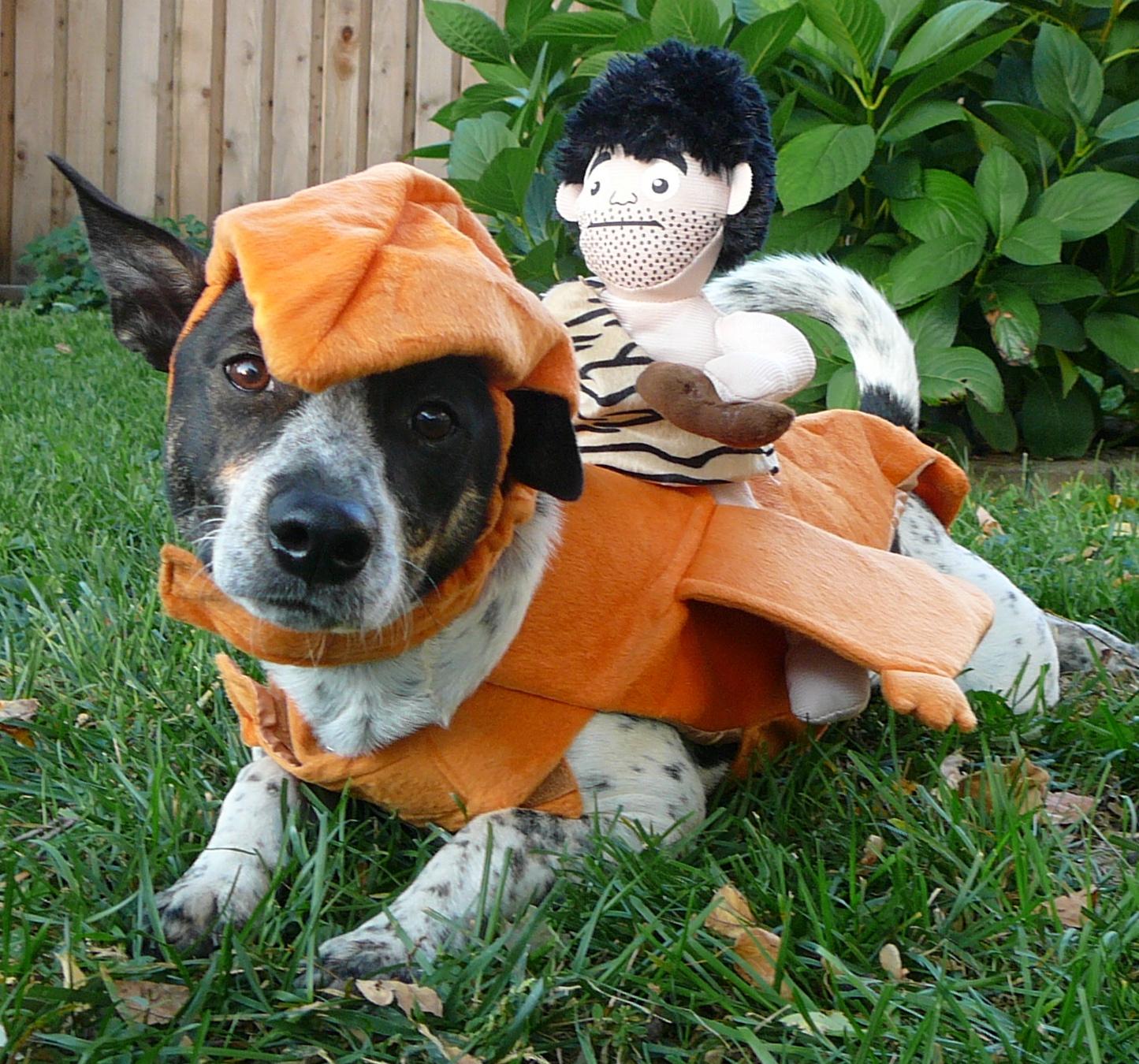 Rhinestone Beagle: Costumed Canines: Dino