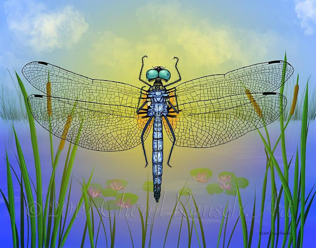 Blue Dasher Dragonfly illustrated in Procreate on an iPad Pro using a real specimen. Illustration by Cheryl Rausch.