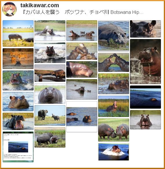『カバは人を襲う ボツワナ、チョベ川 Botswana Hippo』に関連するピンタレストのボード