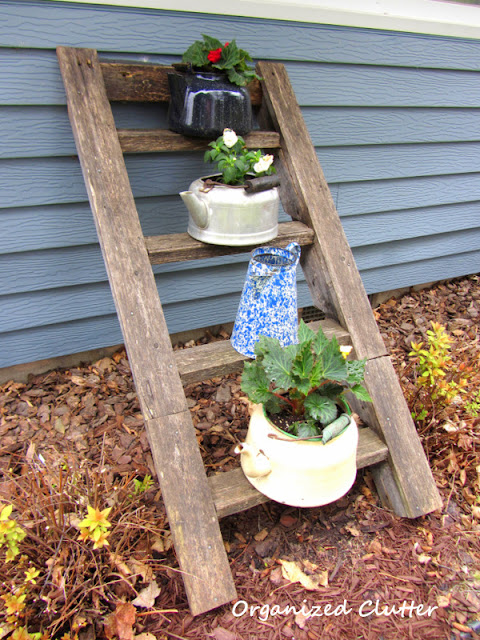 Photo of tea kettles with impatiens & begonias on a ladder