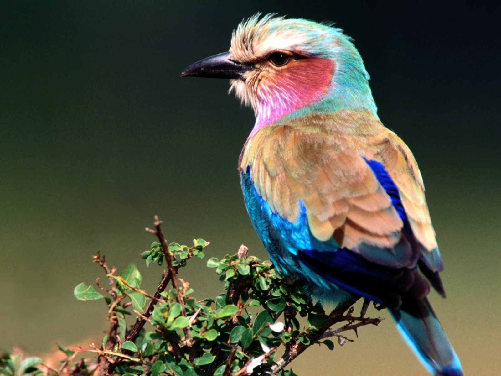 Birds wallpapers hd natural birds wallpapers backgroung - Hd pics of nature with birds ...