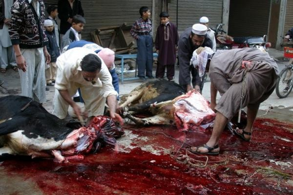 ritual slaughter Then in halal slaughter, the ritual cut is done by a person of the islamic faith although there is a lot of variation in this type of slaughter, a prayer to allah is typically recited during the procedure.