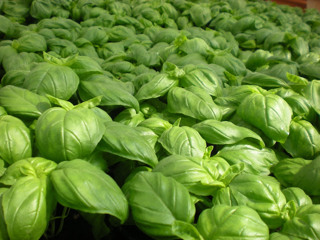 food-green-herb-produce-vegetable-garden