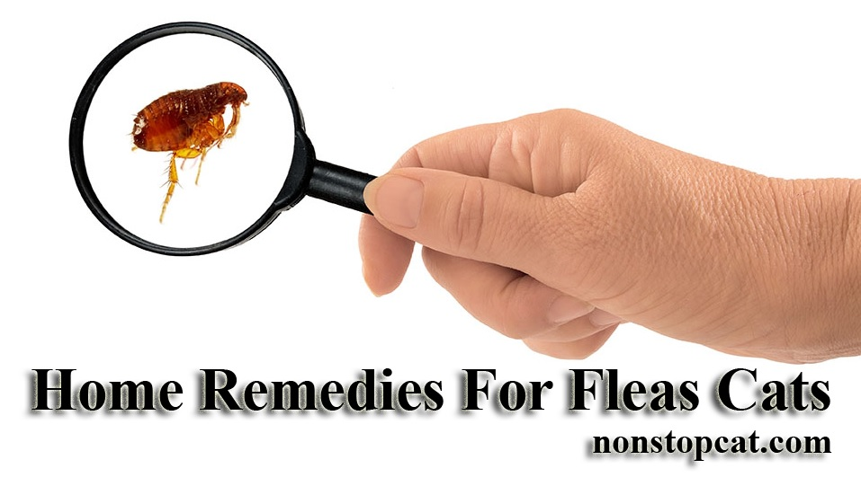 Home Remedies For Fleas Cats