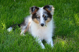 Cachorro a venda, uma história de amor e compreensão para reflexão.