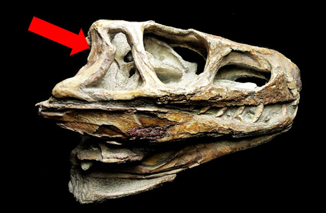 CT scans of 245 million-year-old fossil shed light on evolution of inner ear of birds, crocodiles