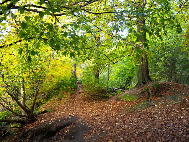 Autumn in Roslin Glen, near Edinburgh, Scotland
