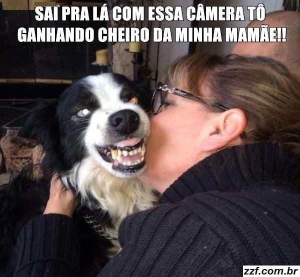 Zzf Seu Blog De Frasesdicas E Coisas Legais Cachorro Dengoso